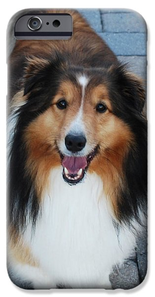 Dogs iPhone Cases - Curious  iPhone Case by John Powell