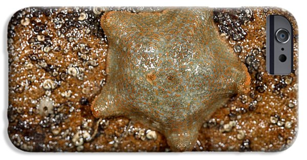 Radial Symmetry Photographs iPhone Cases - Cushion Starfish iPhone Case by Dr Keith Wheeler