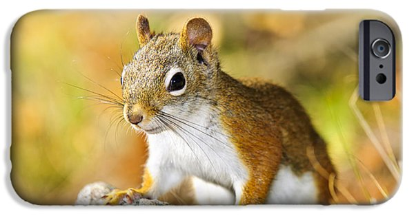 Friendly iPhone Cases - Cute red squirrel closeup iPhone Case by Elena Elisseeva