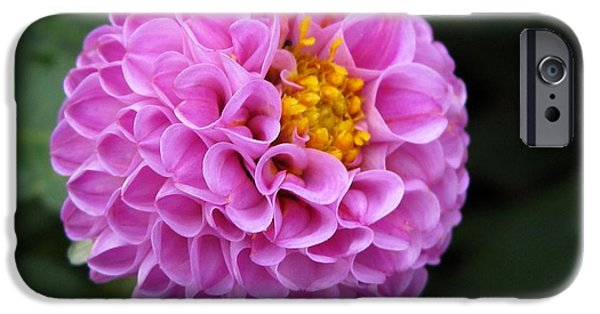 Autumn iPhone Cases - Dahlia named Frank Holmes iPhone Case by J McCombie