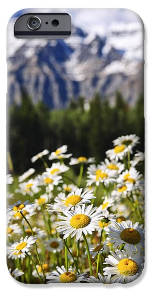 Daisy Photographs iPhone Cases - Daisies at Mount Robson provincial park iPhone Case by Elena Elisseeva