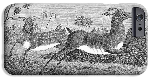 1796 iPhone Cases - Deer, 1796 iPhone Case by Granger