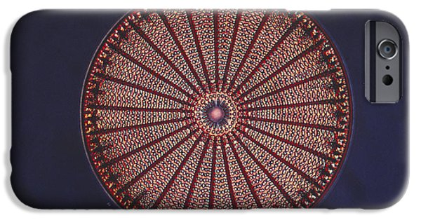 Diatoms Photographs iPhone Cases - Diatom iPhone Case by Eric V. Grave