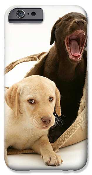 Puppies iPhone Cases - Dogs In Cloth Bag iPhone Case by Jane Burton