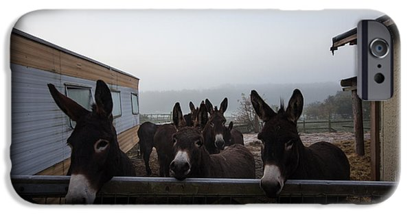 Donkey iPhone Cases - Donkeys iPhone Case by Dawn OConnor