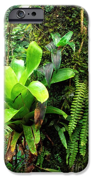 El Yunque National Forest iPhone Case by Thomas R Fletcher