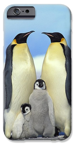 Baby Bird iPhone Cases - Emperor Penguin Aptenodytes Forsteri iPhone Case by Konrad Wothe