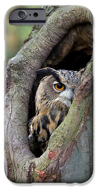 Fauna iPhone Cases - Eurasian Eagle-owl Bubo Bubo Looking iPhone Case by Rob Reijnen