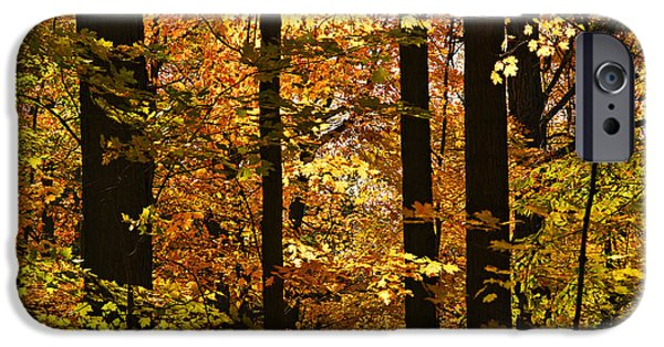 Natural Beauty iPhone Cases - Fall forest iPhone Case by Elena Elisseeva