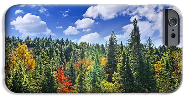 Forest iPhone Cases - Fall forest in sunshine iPhone Case by Elena Elisseeva