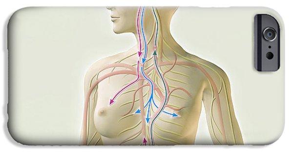 Bonding iPhone Cases - Female Hormone System iPhone Case by Claus Lunau