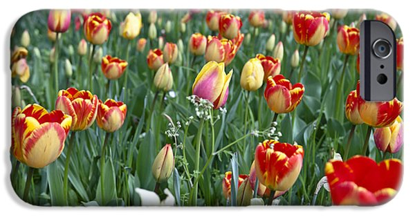 Floral Photographs iPhone Cases - Field Of Tulips iPhone Case by Joana Kruse