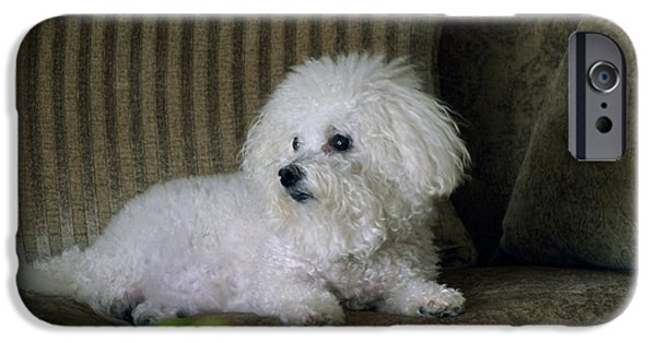 Love The Animal iPhone Cases - Fifi the Bichon Frise  iPhone Case by Michael Ledray