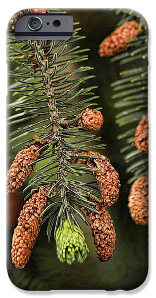 Forest Treasures iPhone Case by Bonnie Bruno