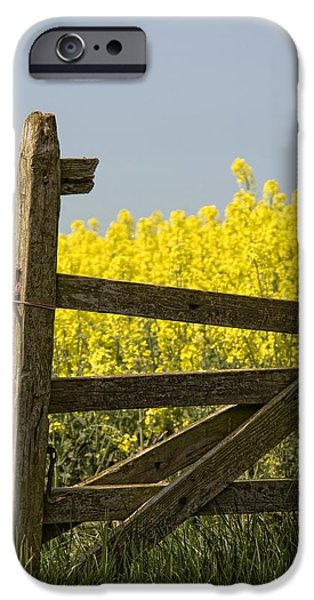 Agricultural iPhone Cases - Gate Next To A Canola Field, Yorkshire iPhone Case by John Short