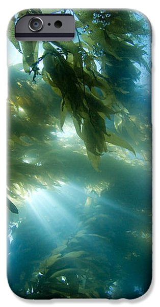 Giant Kelp Forest iPhone Case by Dave Fleetham - Printscapes