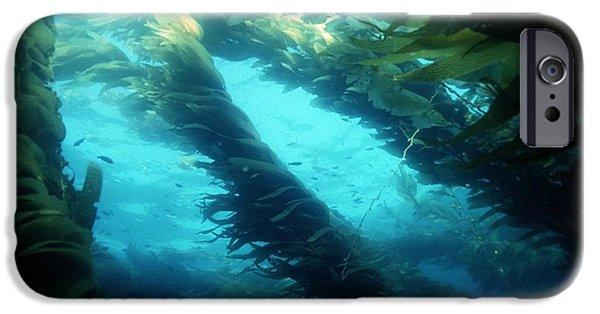 Algal Photographs iPhone Cases - Giant Kelp iPhone Case by Georgette Douwma