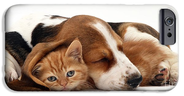 Animal Portraiture iPhone Cases - Ginger Kitten And Basset Puppy iPhone Case by Jane Burton