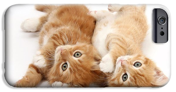 Housecat iPhone Cases - Ginger Kittens iPhone Case by Mark Taylor