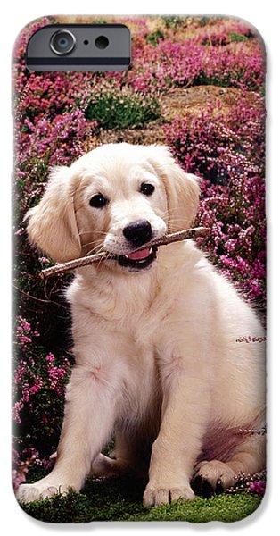 Golden Retriever Puppy iPhone Case by Jane Burton
