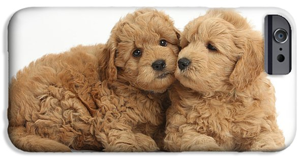 Recently Sold -  - Cute Puppy iPhone Cases - Goldendoodle Puppies iPhone Case by Mark Taylor