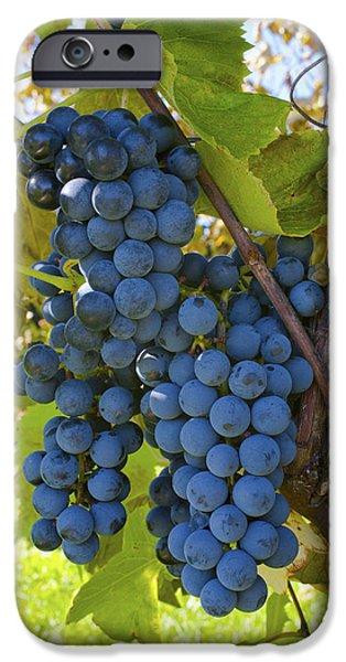 Sutton iPhone Cases - Grapes On A Vine Sutton Junction Quebec iPhone Case by David Chapman