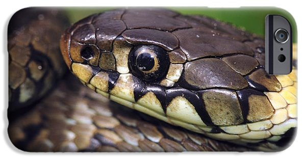 Serpent iPhone Cases - Grass Snake iPhone Case by Colin Varndell