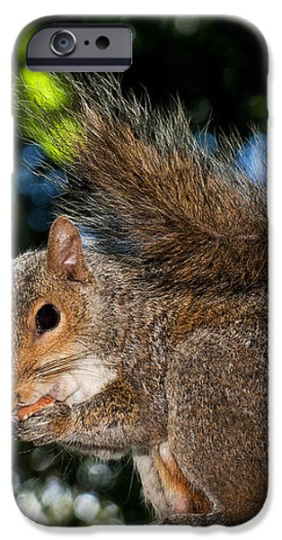 Gray squirrel iPhone Case by Fabrizio Troiani