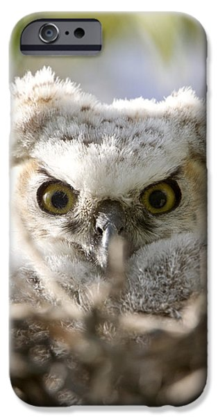 Baby Bird Digital iPhone Cases - Great Horned Owl Babies Owlets in Nest iPhone Case by Mark Duffy