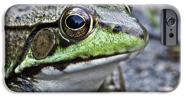 Amphibian iPhone Cases - Green Frog iPhone Case by Michael Peychich