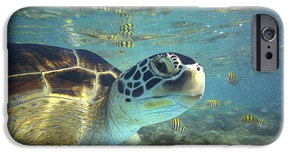 Animalsandearth iPhone Cases - Green Sea Turtle Balicasag Island iPhone Case by Tim Fitzharris