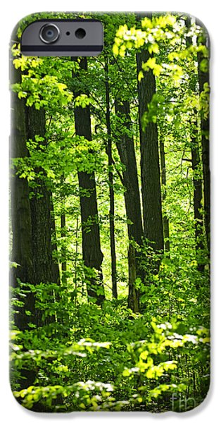 Young Photographs iPhone Cases - Green spring forest iPhone Case by Elena Elisseeva