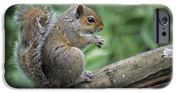 Sciurus Carolinensis iPhone Cases - Grey Squirrel iPhone Case by David Aubrey