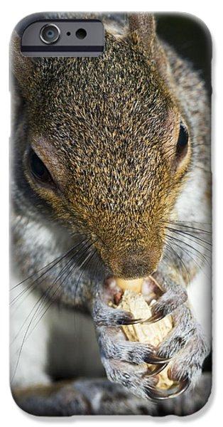 Sciurus Carolinensis iPhone Cases - Grey Squirrel iPhone Case by Georgette Douwma