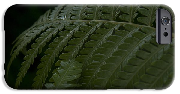 Abstracts From Nature iPhone Cases - Hapuu Pulu Hawaiian Tree Fern  iPhone Case by Sharon Mau