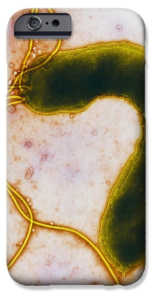 Helicobacter Pylori iPhone Cases - Helicobacter Pylori Bacterium iPhone Case by Nibsc