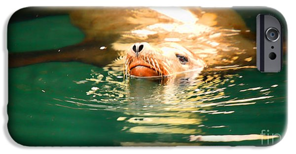 Sea Lions iPhone Cases - Hello iPhone Case by Cheryl Young