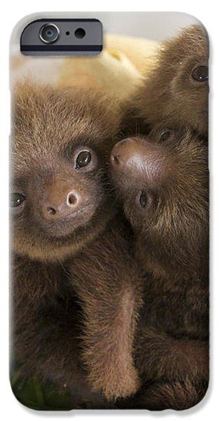 Hoffmanns Two-toed Sloth Choloepus iPhone Case by Suzi Eszterhas