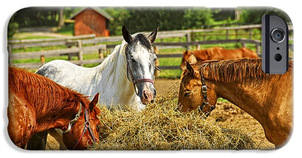 Meadow Photographs iPhone Cases - Horses at the ranch iPhone Case by Elena Elisseeva