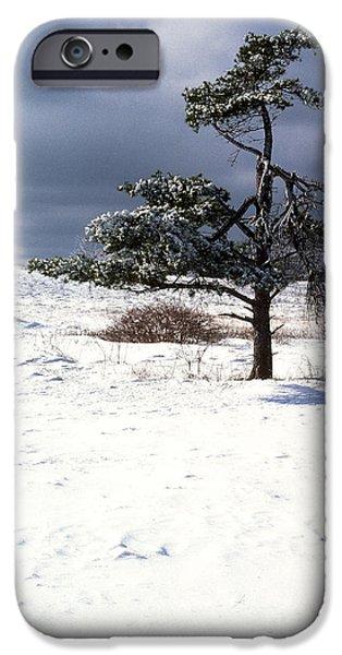Iced Tree Shenandoah National Park iPhone Case by Thomas R Fletcher