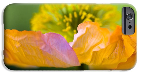 Close Up Floral Photographs iPhone Cases - Iceland Poppy iPhone Case by Silke Magino