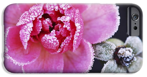 Snowy iPhone Cases - Icy rose iPhone Case by Elena Elisseeva