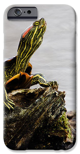King of the Log iPhone Case by Jason Smith