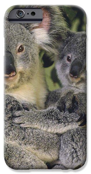 Koala Phascolarctos Cinereus Mother iPhone Case by Gerry Ellis