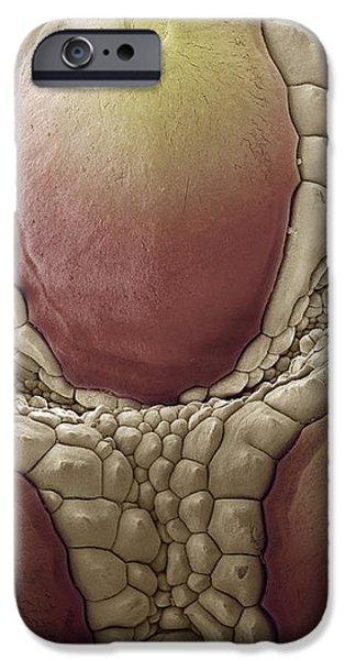 Komodo Dragon Skin, Sem iPhone Case by Steve Gschmeissner