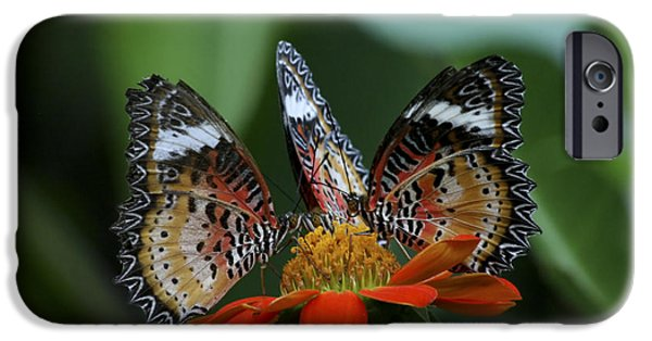 Lilachw iPhone Cases - Lacewing butterfly Cethosia cyane iPhone Case by Lilach Weiss