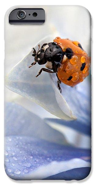 Ladybug iPhone Case by Nailia Schwarz