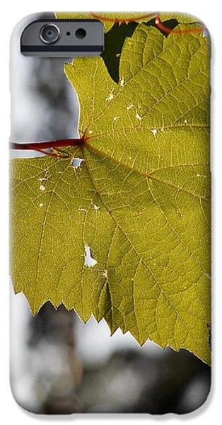 leaves of wine grape iPhone Case by Michal Boubin