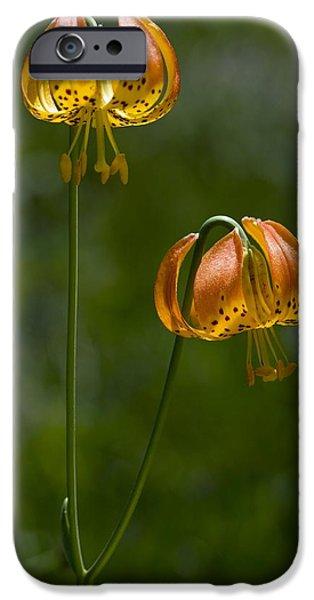 Lilium iPhone Cases - Leopard Lily (lilium Pardalinum) iPhone Case by Bob Gibbons