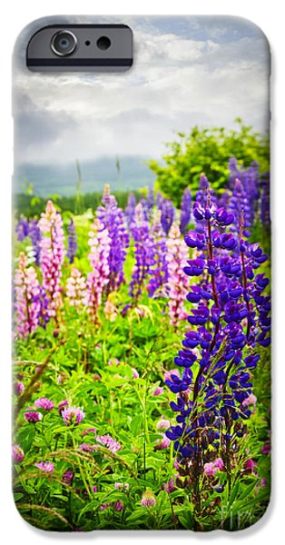 Lupins in Newfoundland meadow iPhone Case by Elena Elisseeva